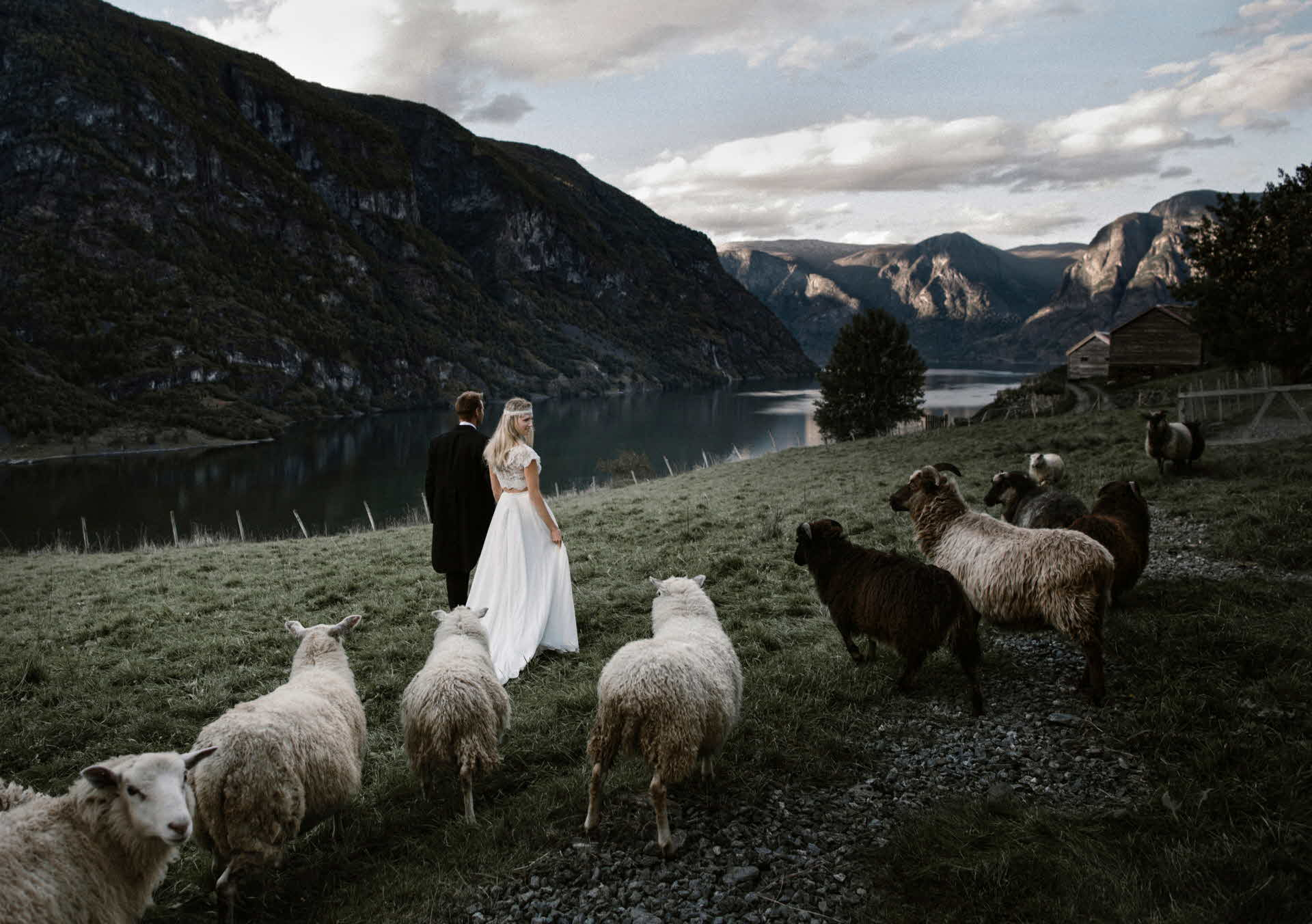 A groom and a bride in white, long dress walking on a field surrounded by sheep. The Aurlandsfjord in the background.