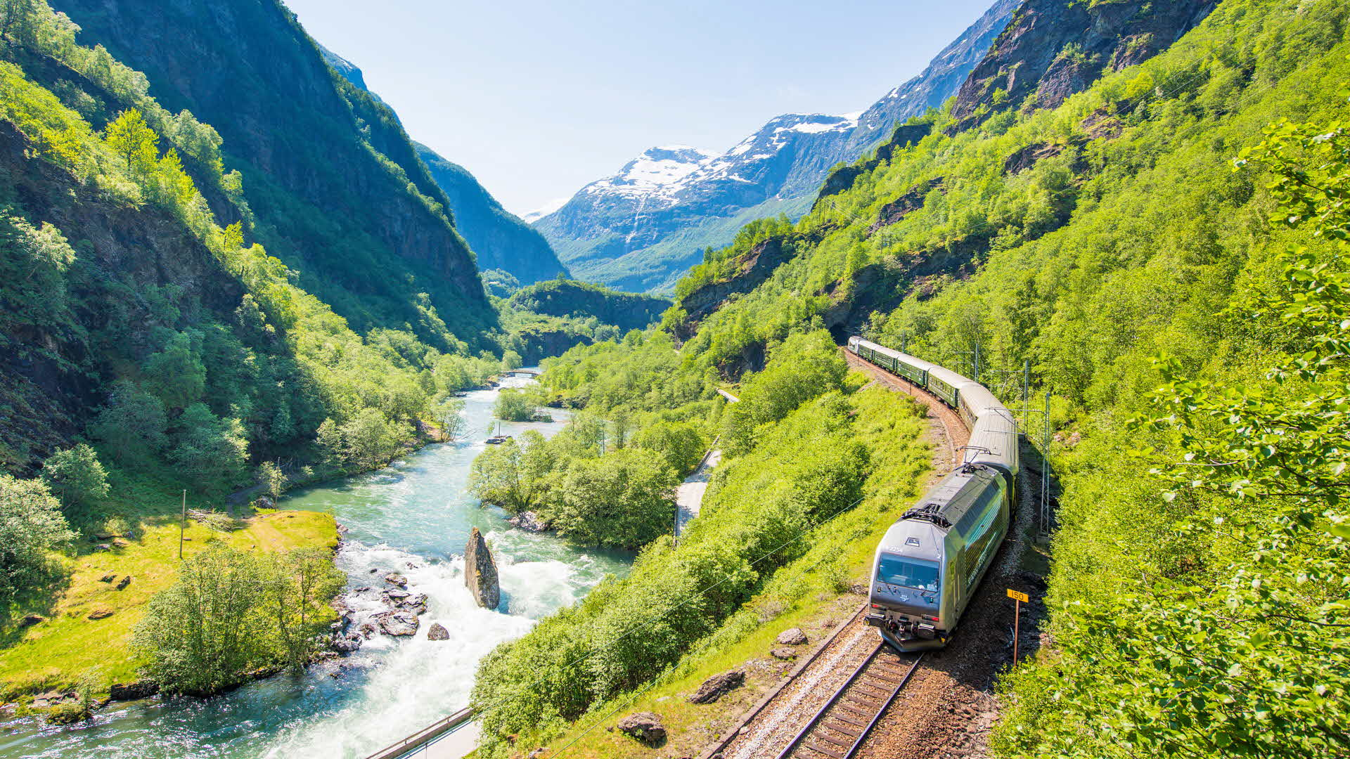 The Flåm Railway passing through the fertile Flåmsdalen Valley next to the rushing river on a sunny day, white mountain peaks in the background