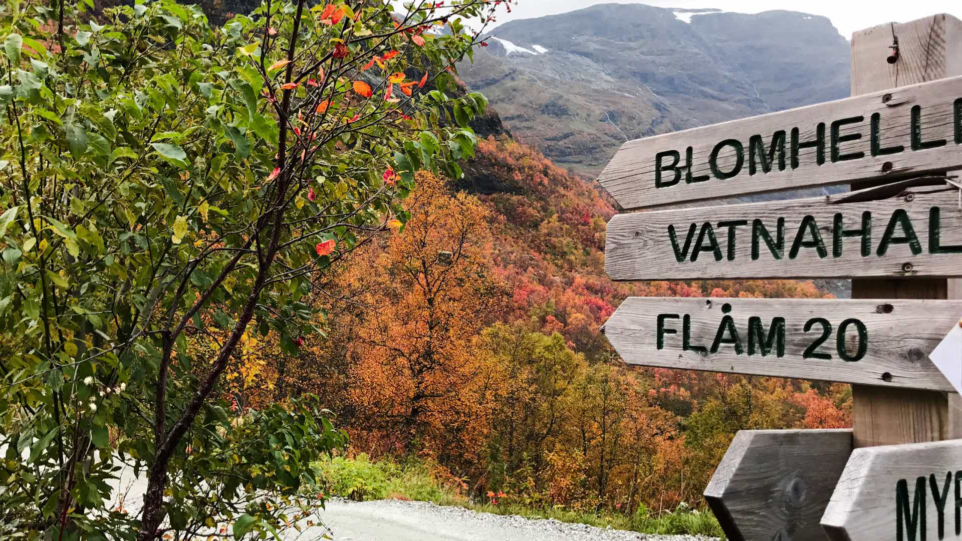 Autumn coloured forest and a wooden sign showing directions to Vatnahalsen and Flåm.
