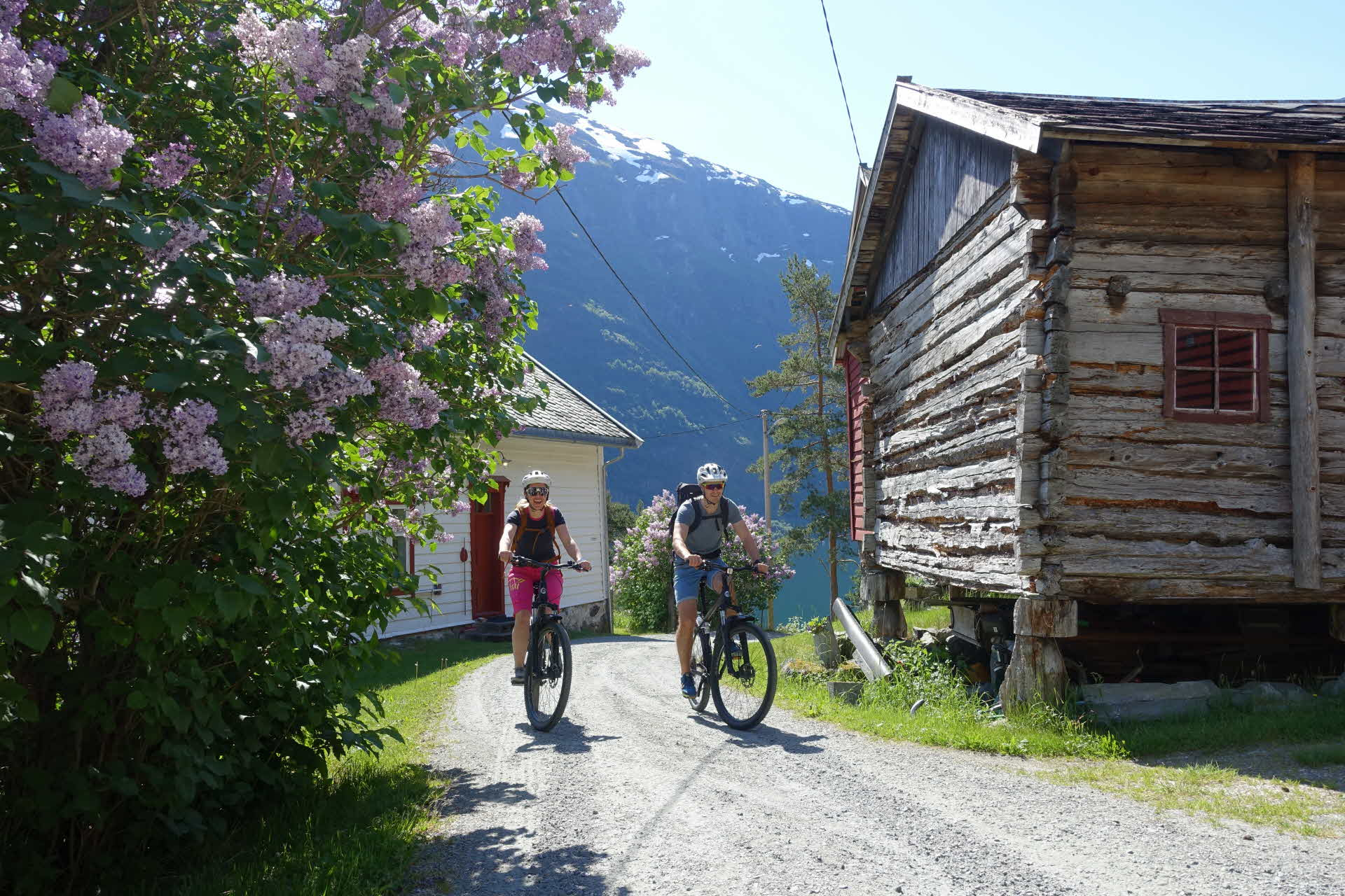 A happy mid 30's couple on bikes climbing up the gravel road in Dyrdal between old buildings and violet flowering trees